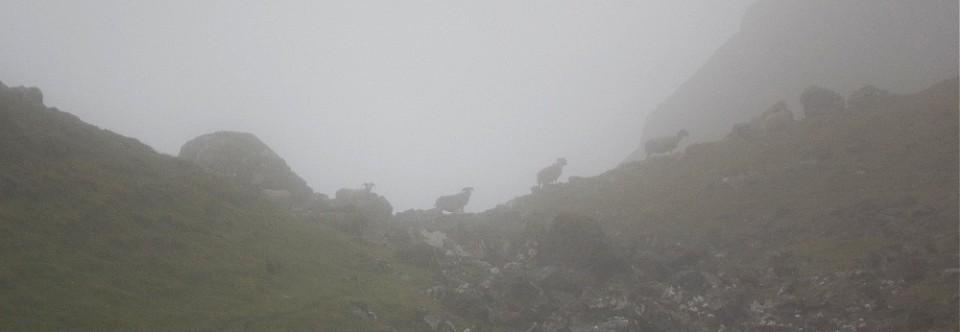 Mgła Owiec – nowa powieść Leonie Swann